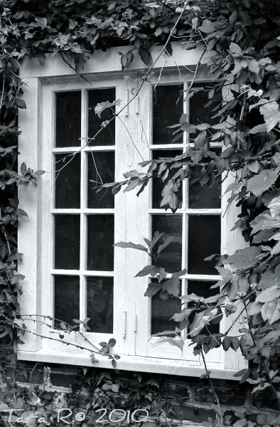black and white ivy-covered window
