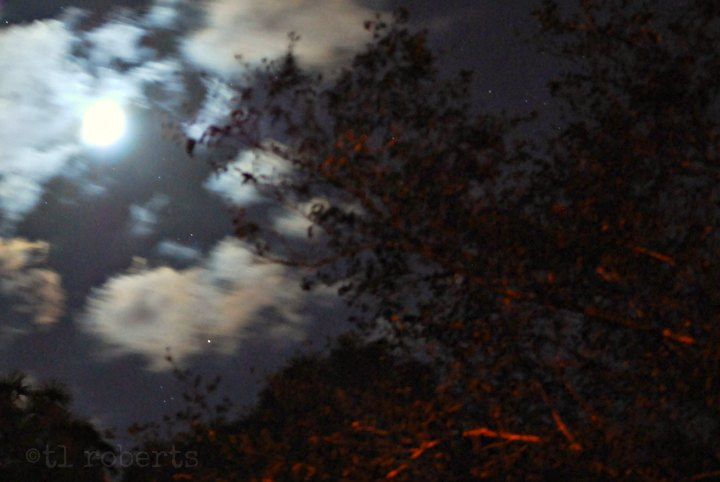 moonlight in the trees