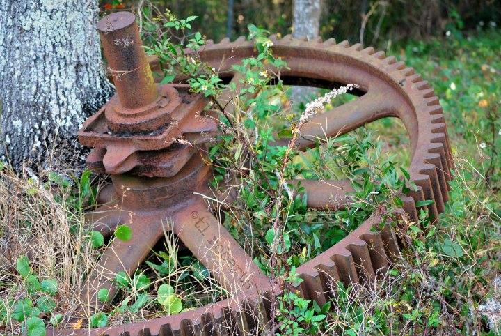 tree growing through tractor cog