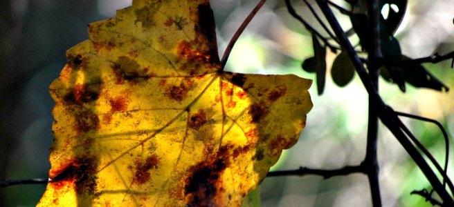 yellow leaf bokeh background