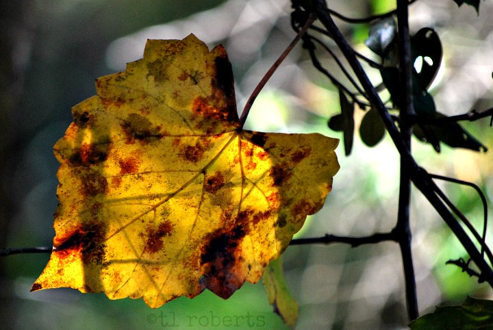 yellow leaf bokeh background