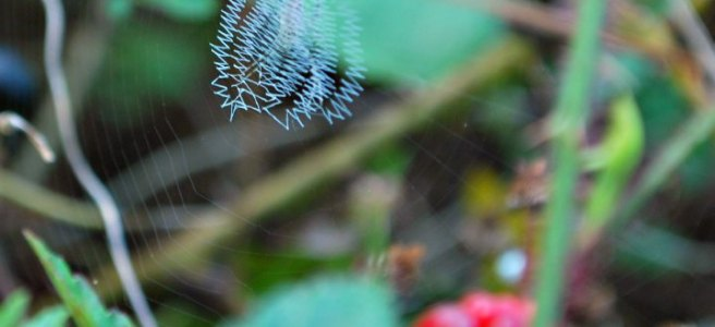 writing spider web