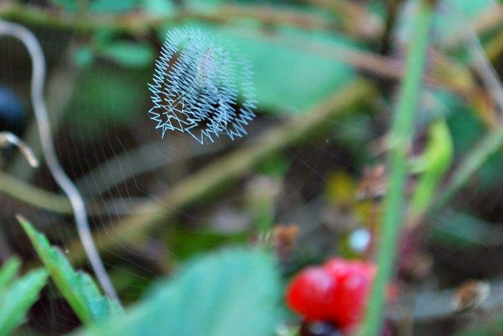 writing spider web