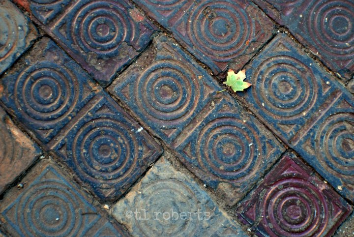 green leaf on intricate tile