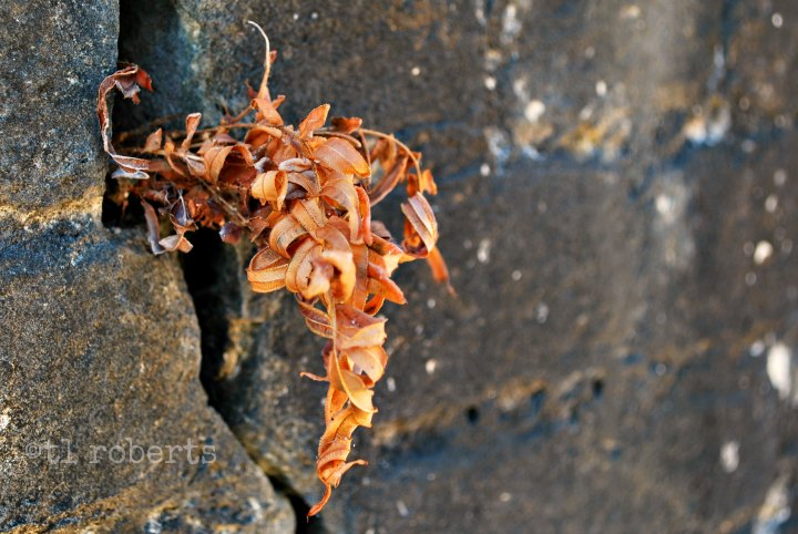 vine growing out of stone wall