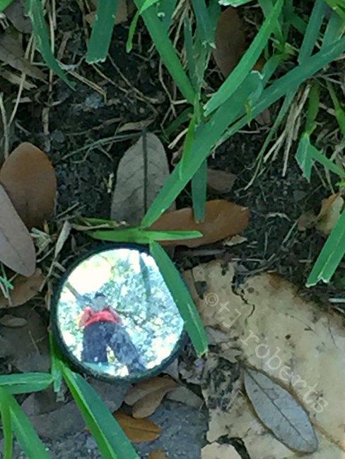 selfie in tiny mirror