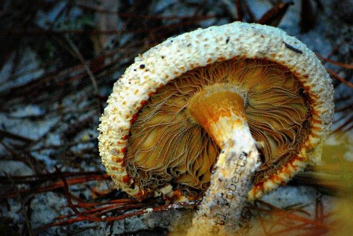 underneath a mushroom