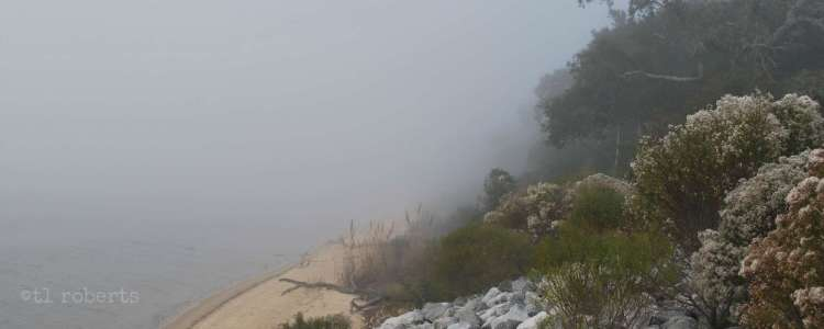 rocky, foggy beach