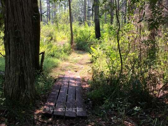 sunlight trail