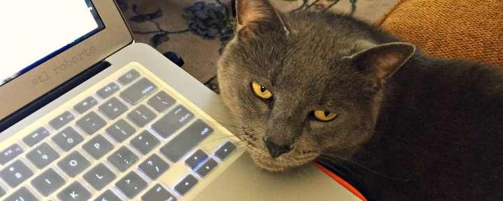 writer's cat