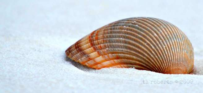 macro seashell on white sand