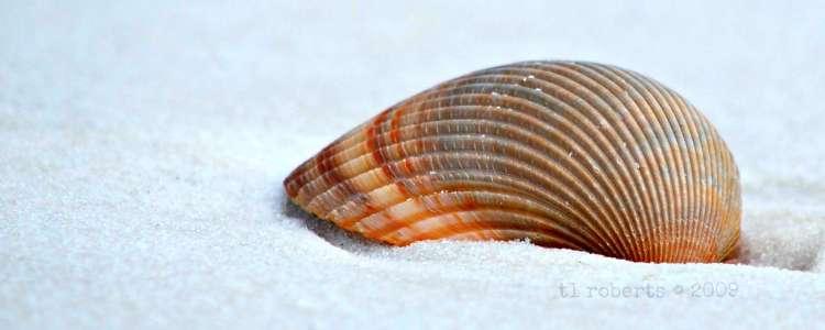 macro seashell on white sand