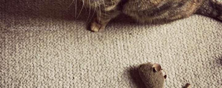 cat and toy mouse