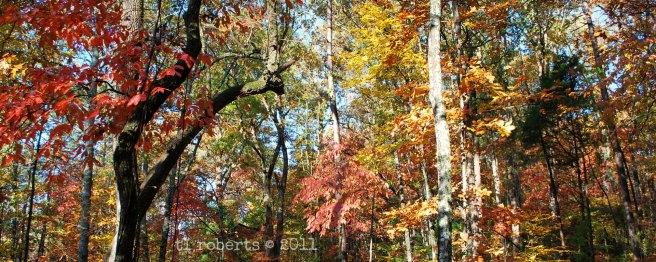 bright fall leaves