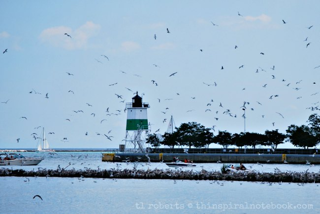 jetty and seagulls