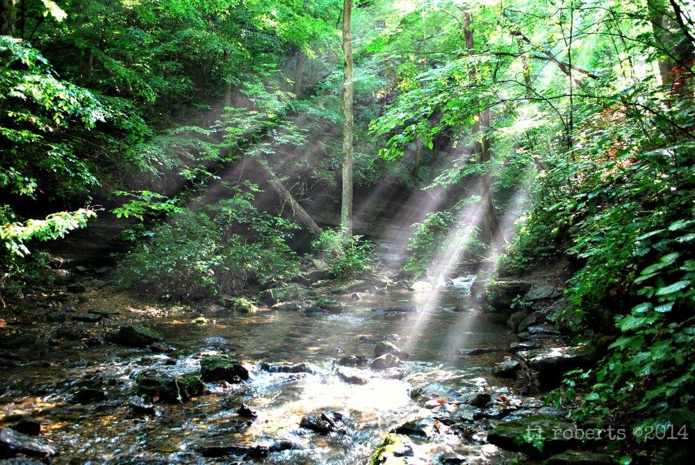 sunlight filtering through trees