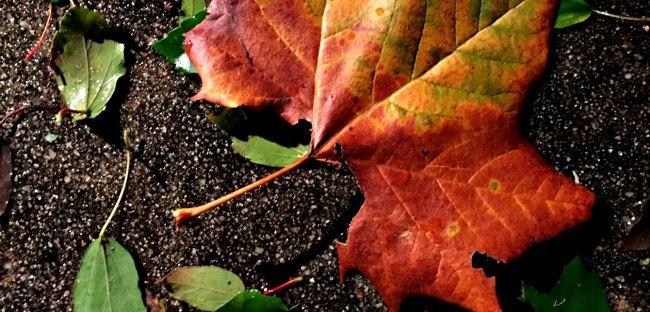 last fall leaf