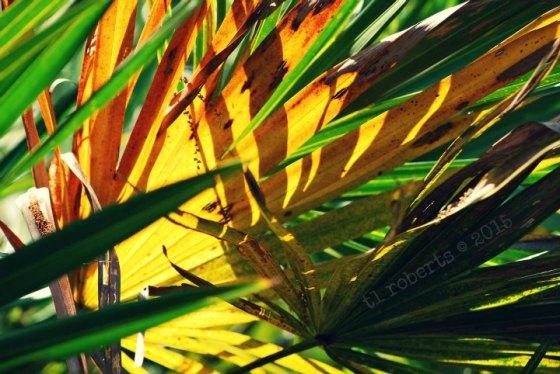 backlit palm frond