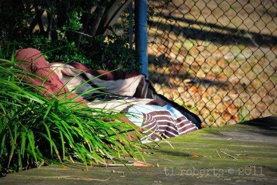old sleeping bag
