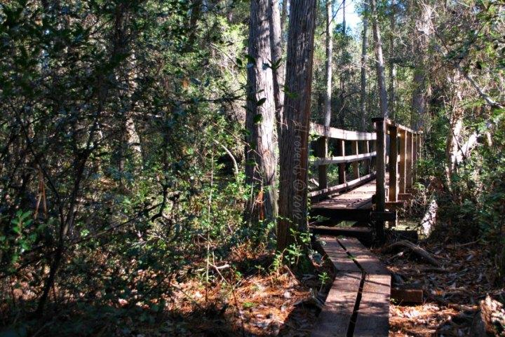 Bridge between