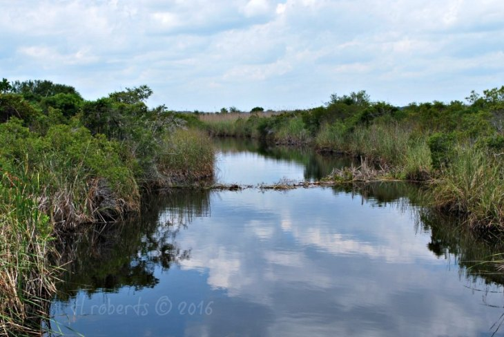 creek running through green landscape