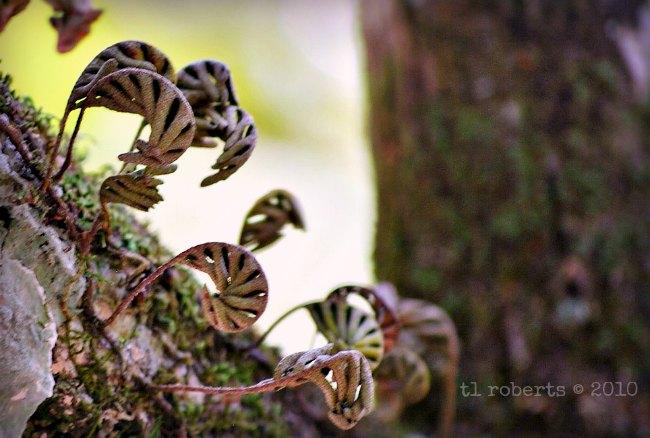 new growth ferns