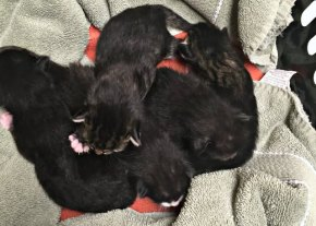 Help Save Momma Cat &Kittens