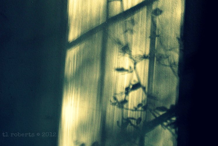 shadows through a window