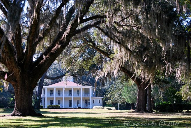 Antebellum house with old oak trees draped in Spanish Moss