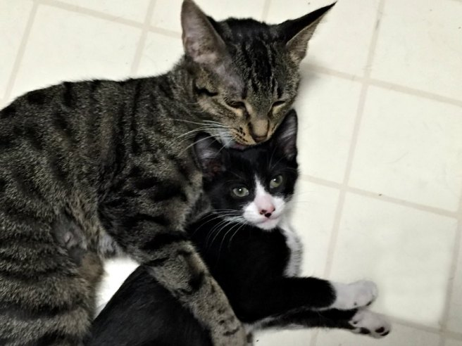 Mother cat and kitten
