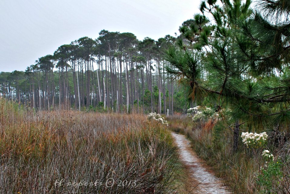 pine tree grove at the end of a sandy trail