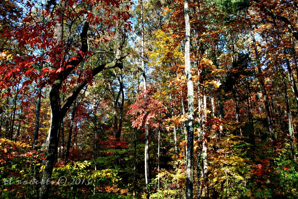 woods in autumn foliage