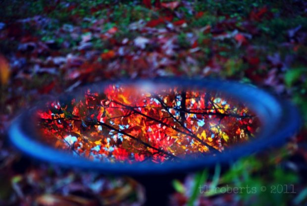 leaves reflected in a birdbath