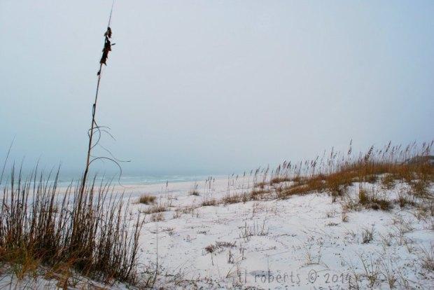 gray foggy beach