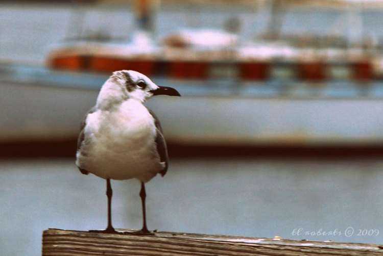 seagull at marina