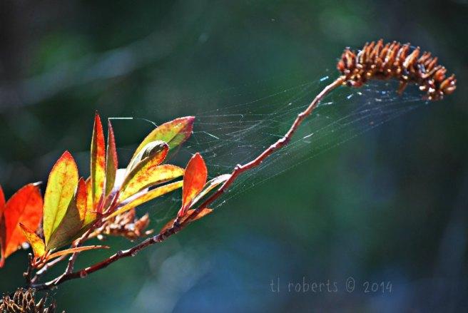 glimmering spiderweb