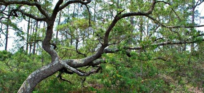 bent over tree