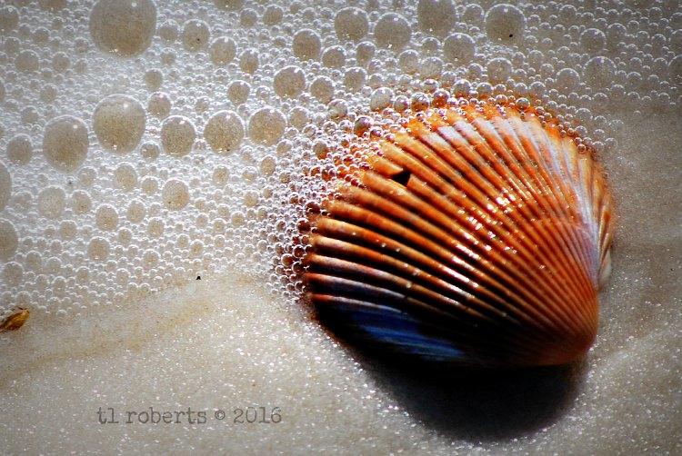 ochre seashell in water
