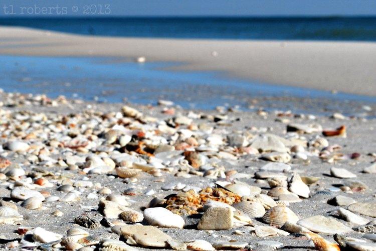 broken seashells on the beach