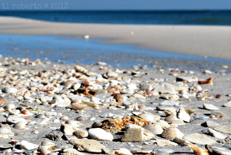 broken seashells on the beach