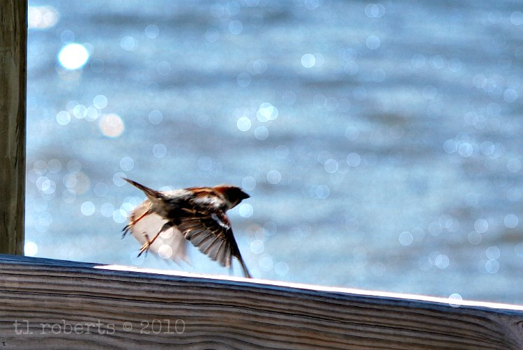 bird takes off in flight