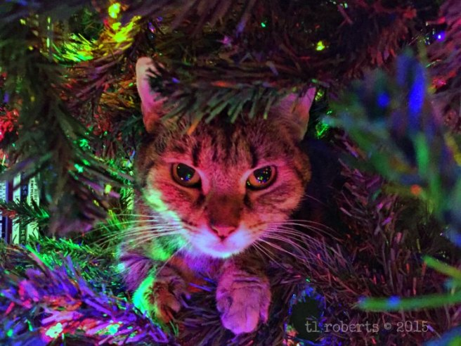 cat in a Christmas tree