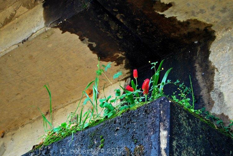 concreteflowers