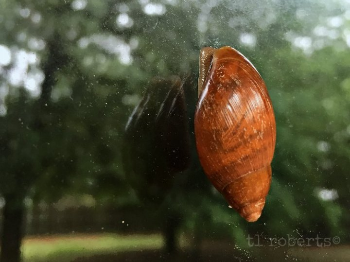 At a snail's pace