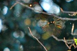 brassweb