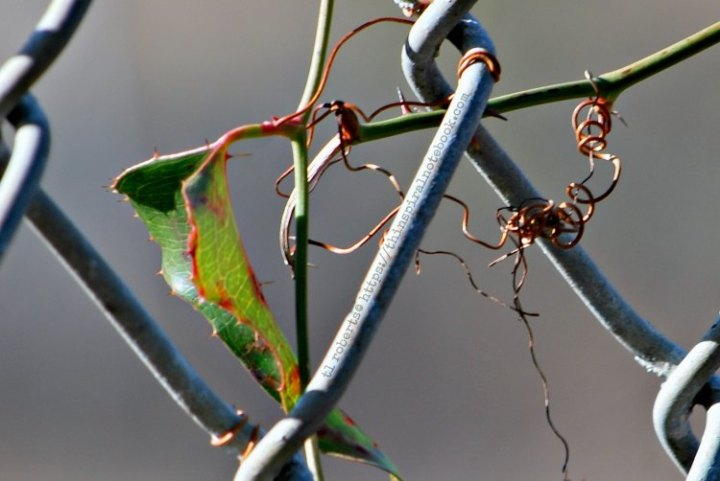 Wire and vine