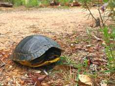 turtle7Apr19