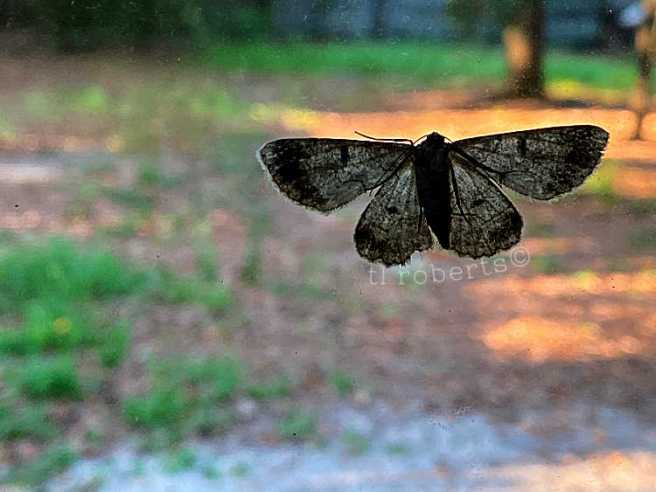 silhouette of small moth